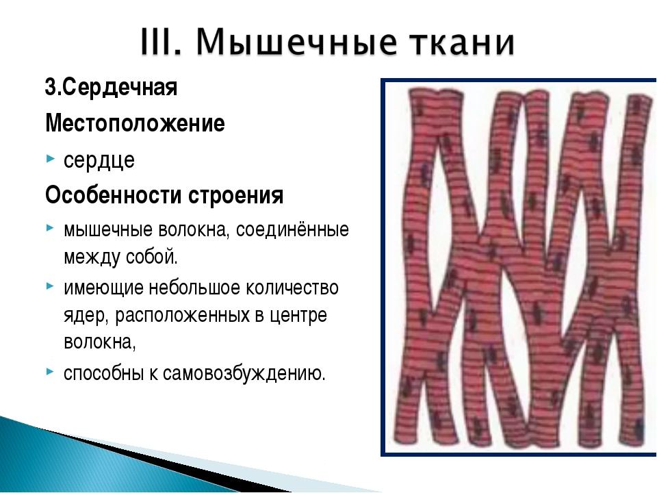 3.Сердечная Местоположение сердце Особенности строения мышечные волокна, соед...