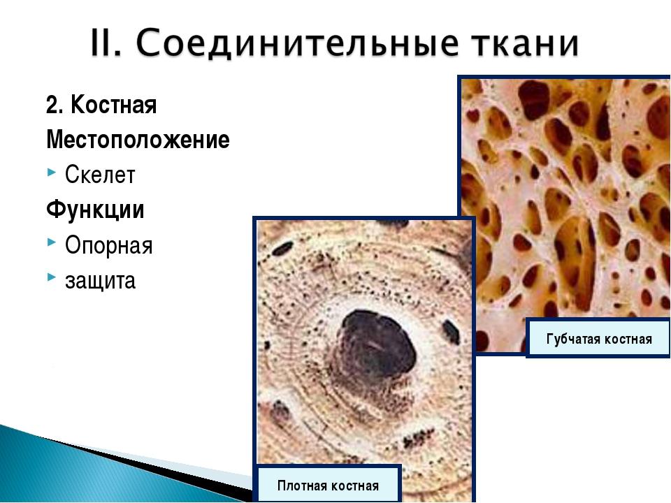 2. Костная Местоположение Скелет Функции Опорная защита Губчатая костная Плот...