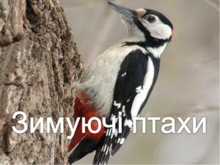 * http://www.deti-66.ru/ * http://www.deti-66.ru/