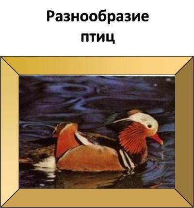 http://shkolnoecarstvo.ucoz.ru/_pu/0/s02383763.jpg