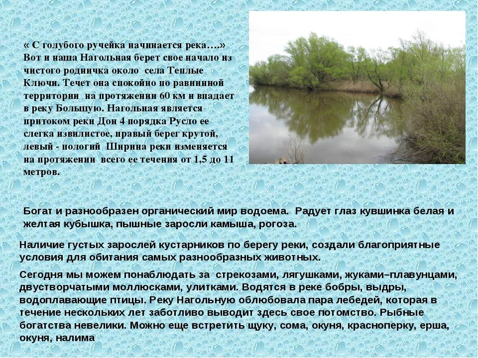 « С голубого ручейка начинается река….» Вот и наша Нагольная берет свое начал...