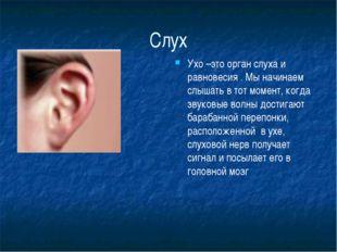 Слух Ухо –это орган слуха и равновесия . Мы начинаем слышать в тот момент, ко