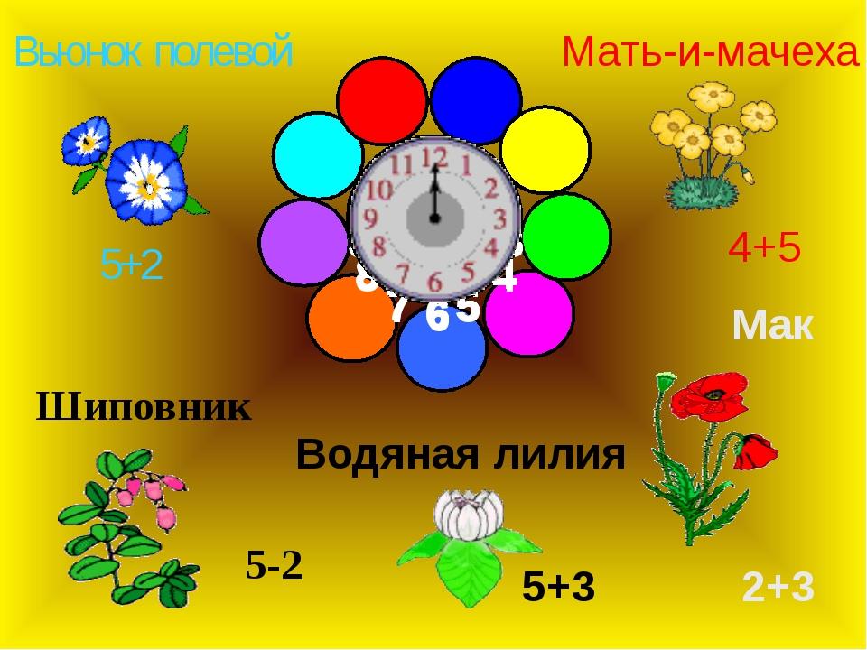 Вьюнок полевой Мак Шиповник Мать-и-мачеха Водяная лилия 5+2 5-2 5+3 2+3 4+5...