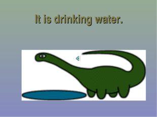 It is drinking water.
