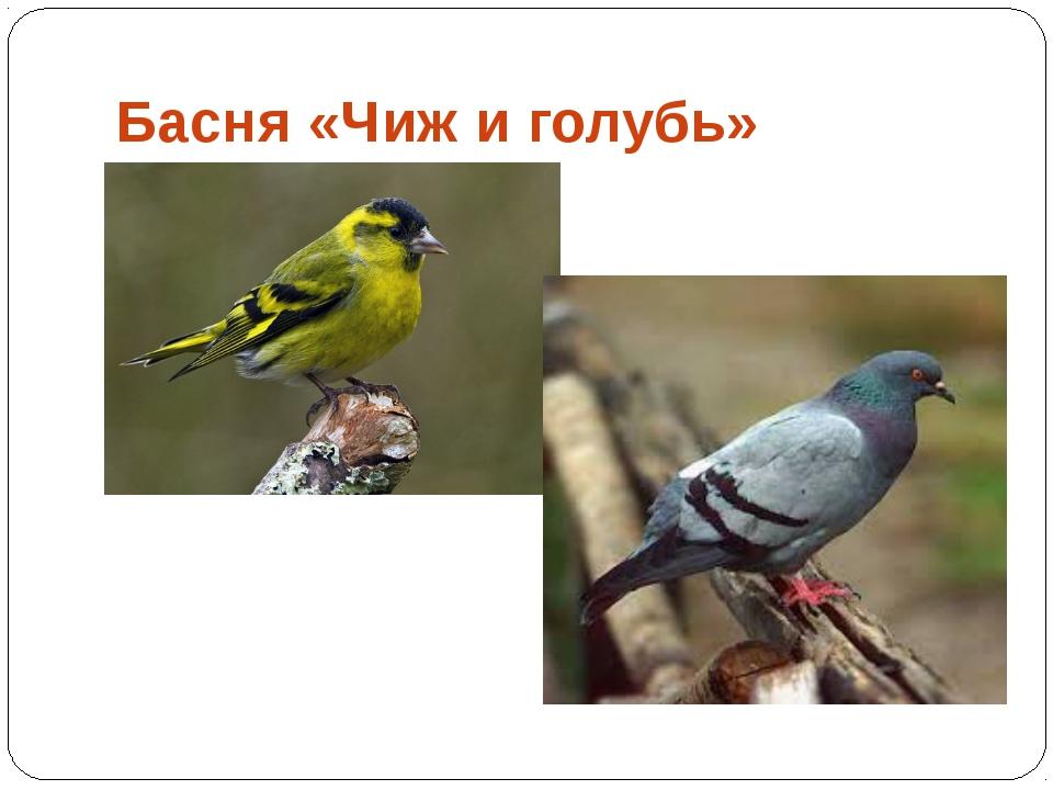Басня «Чиж и голубь»
