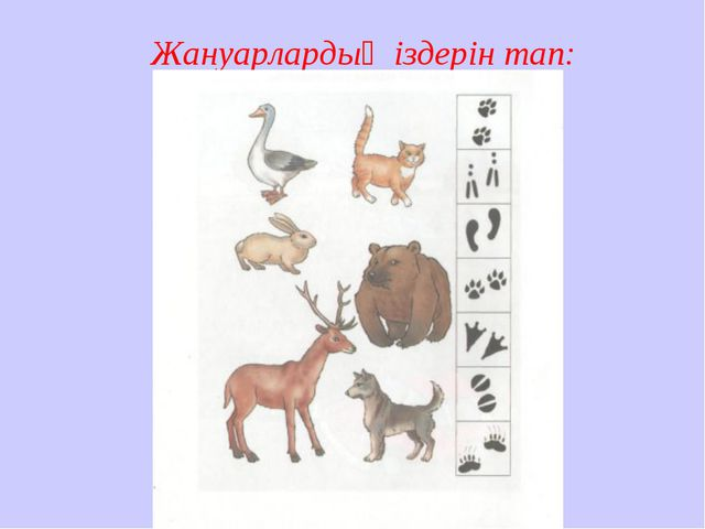 Жануарлардың іздерін тап:
