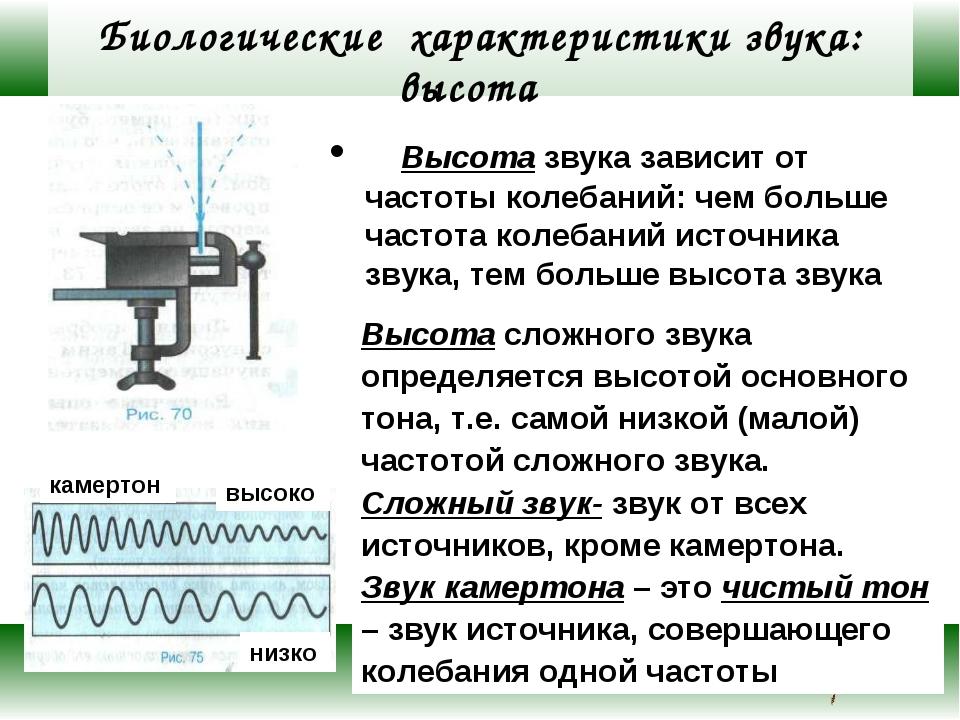 Биологические характеристики звука: высота Высота звука зависит от частоты ко...