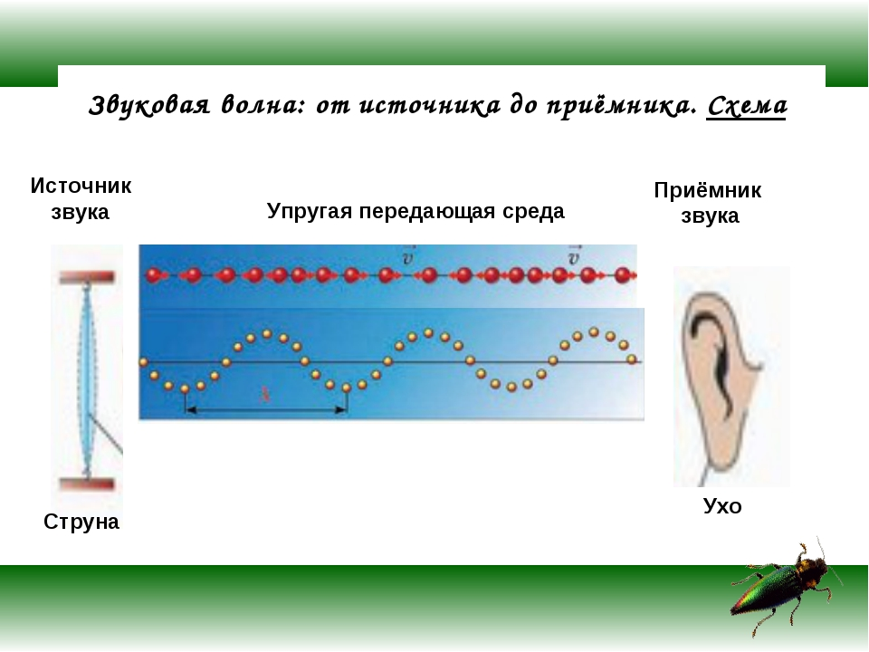 Звуковая волна: от источника до приёмника. Схема