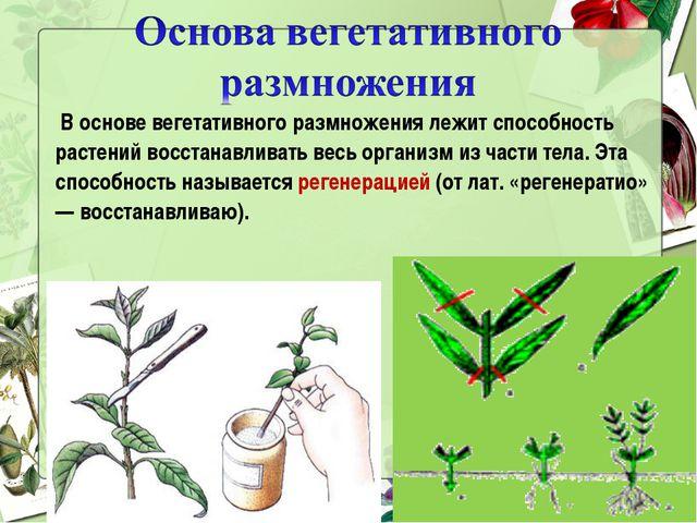 Гдз черенкование комнатных растений урок в 6 класс