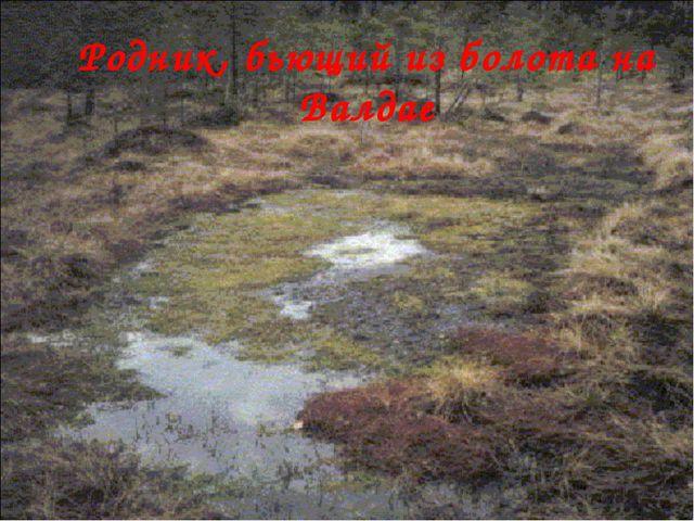 Родник, бьющий из болота на Валдае