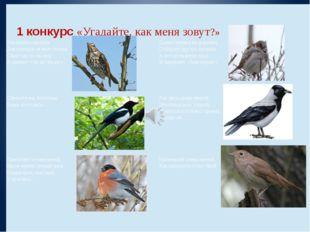 1 конкурс«Угадайте, как меня зовут?»  Эта птичка никогда Для птенцов не вь