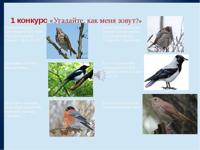 1 конкурс«Угадайте, как меня зовут?»  Эта птичка никогда Для птенцов не вь...