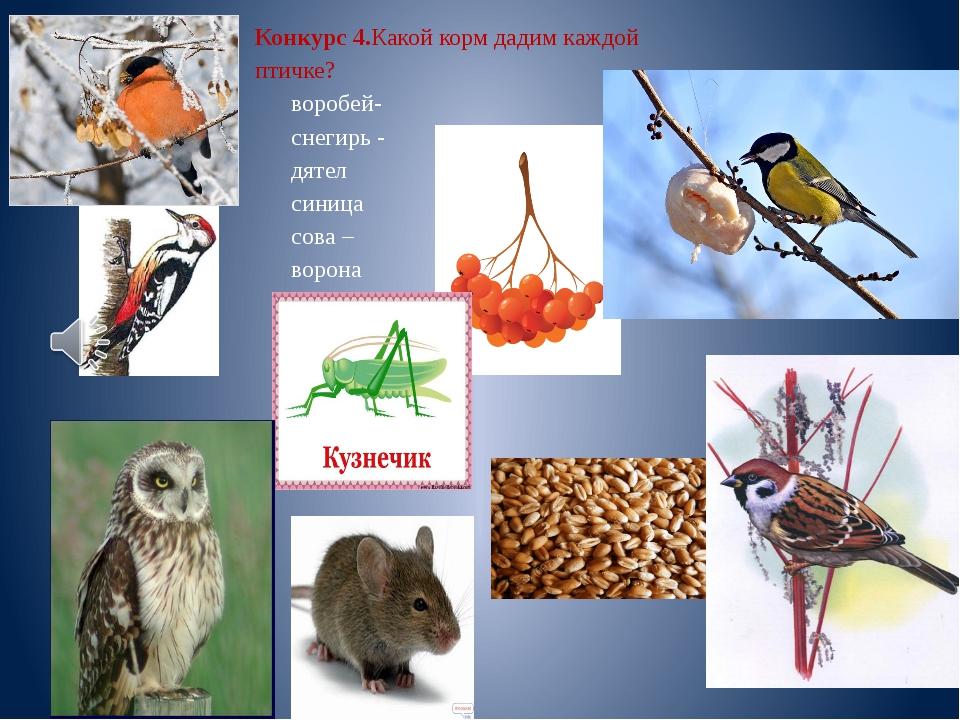 Конкурс 4.Какой корм дадим каждой птичке? воробей- снегирь - дятел синица сов...