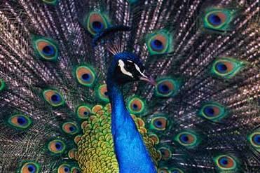D:\Суреттер Әлемі\Көрнекілікке арналған\Биологиялық\Зоология\ҚҰСТАР\Копия 34-29-BirdsCollage[1].jpg
