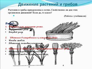 Движение растений и грибов Растения и грибы прикреплены к почве. Свойственно
