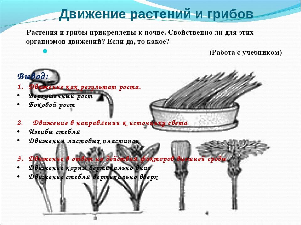 Движение растений и грибов Растения и грибы прикреплены к почве. Свойственно...