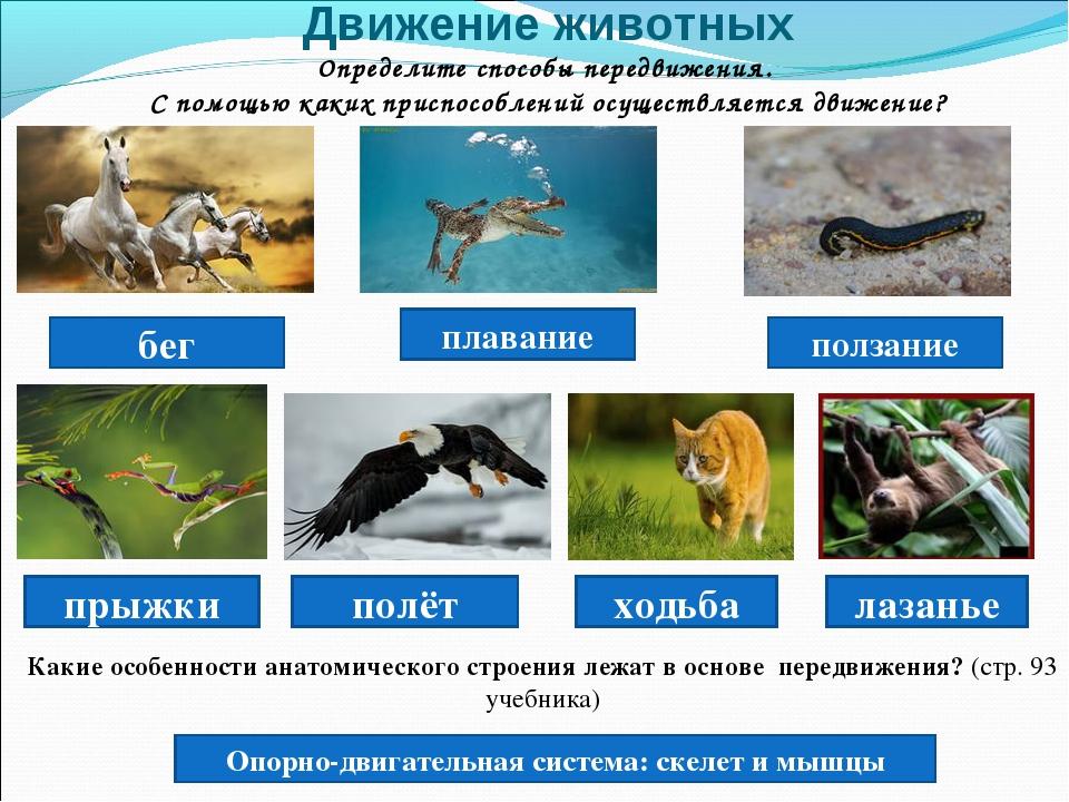 Движение животных Определите способы передвижения. С помощью каких приспособл...