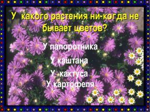 У какого растения ни-когда не бывает цветов? У папоротника У каштана У кактус