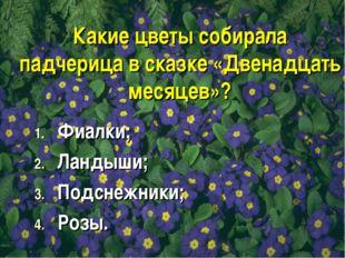 Какие цветы собирала падчерица в сказке «Двенадцать месяцев»? Фиалки; Ландыши