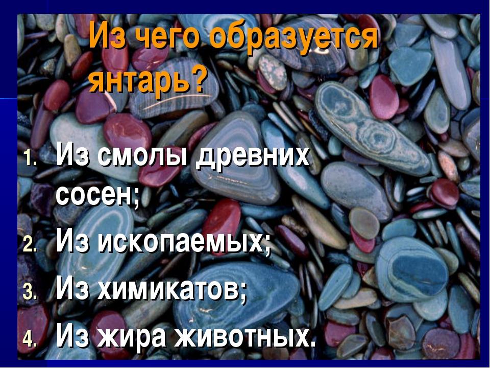 Из чего образуется янтарь? Из смолы древних сосен; Из ископаемых; Из химикато...