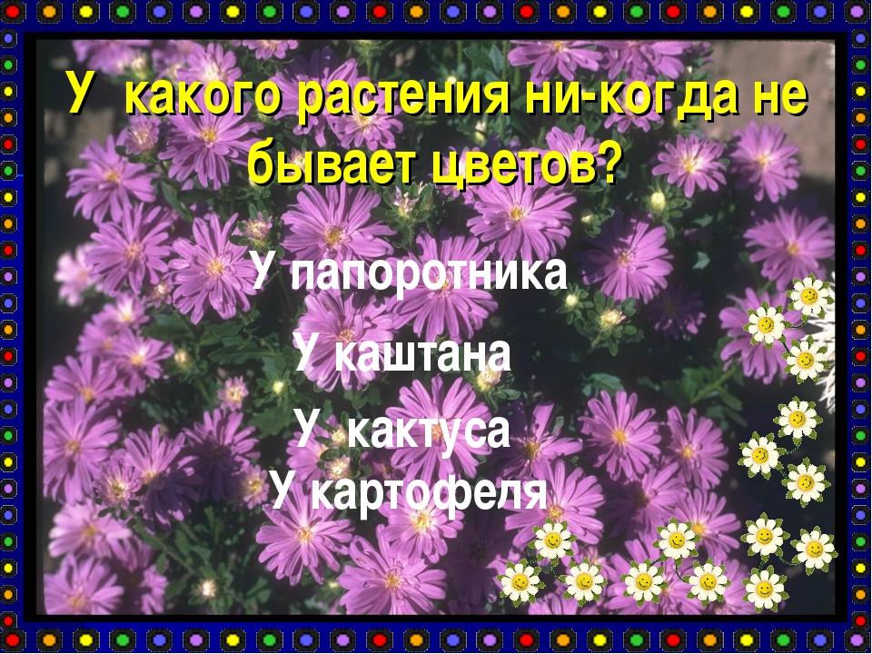 У какого растения ни-когда не бывает цветов? У папоротника У каштана У кактус...