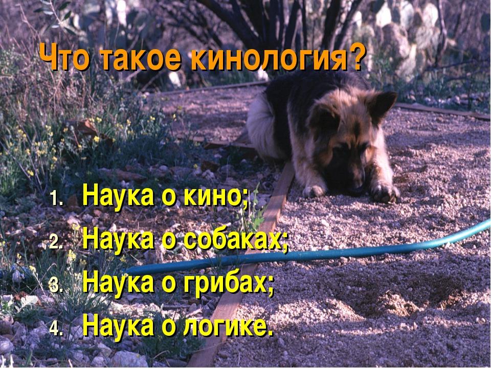 Что такое кинология? Наука о кино; Наука о собаках; Наука о грибах; Наука о л...