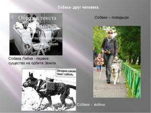Собака- друг человека. Собака Лайка - первое существо на орбите Земли Собаки