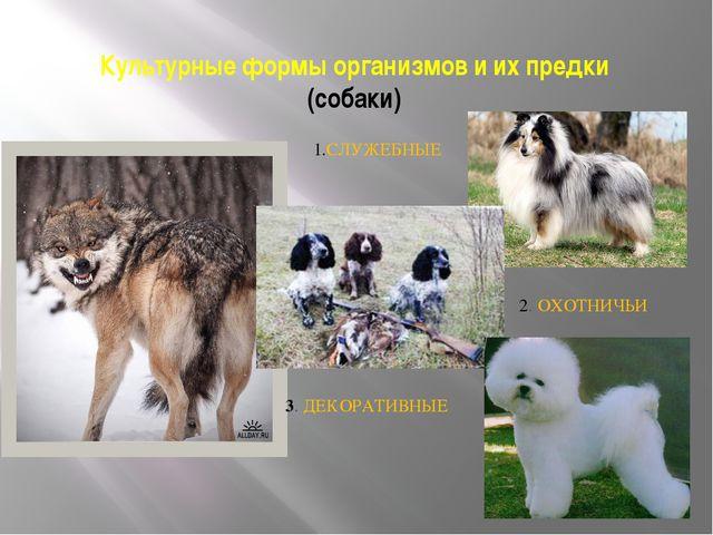 Культурные формы организмов и их предки (собаки) 1.СЛУЖЕБНЫЕ 2. ОХОТНИЧЬИ 3....