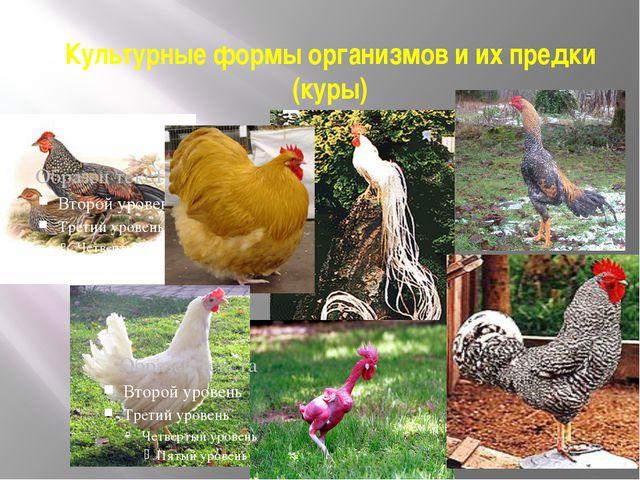 Культурные формы организмов и их предки (куры)