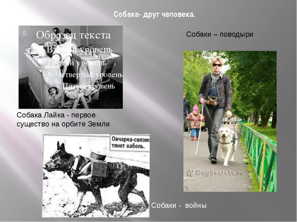 Собака- друг человека. Собака Лайка - первое существо на орбите Земли Собаки...