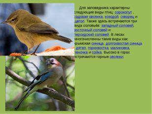 Для заповедника характерны следующие виды птиц: сорокопут , садовая овсянка,