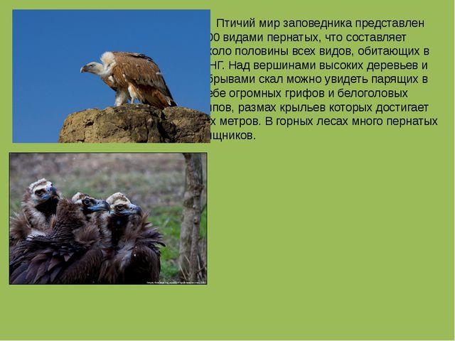 Птичий мир заповедника представлен 300 видами пернатых, что составляет около...
