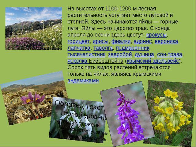 На высотах от 1100-1200 м лесная растительность уступает место луговой и степ...