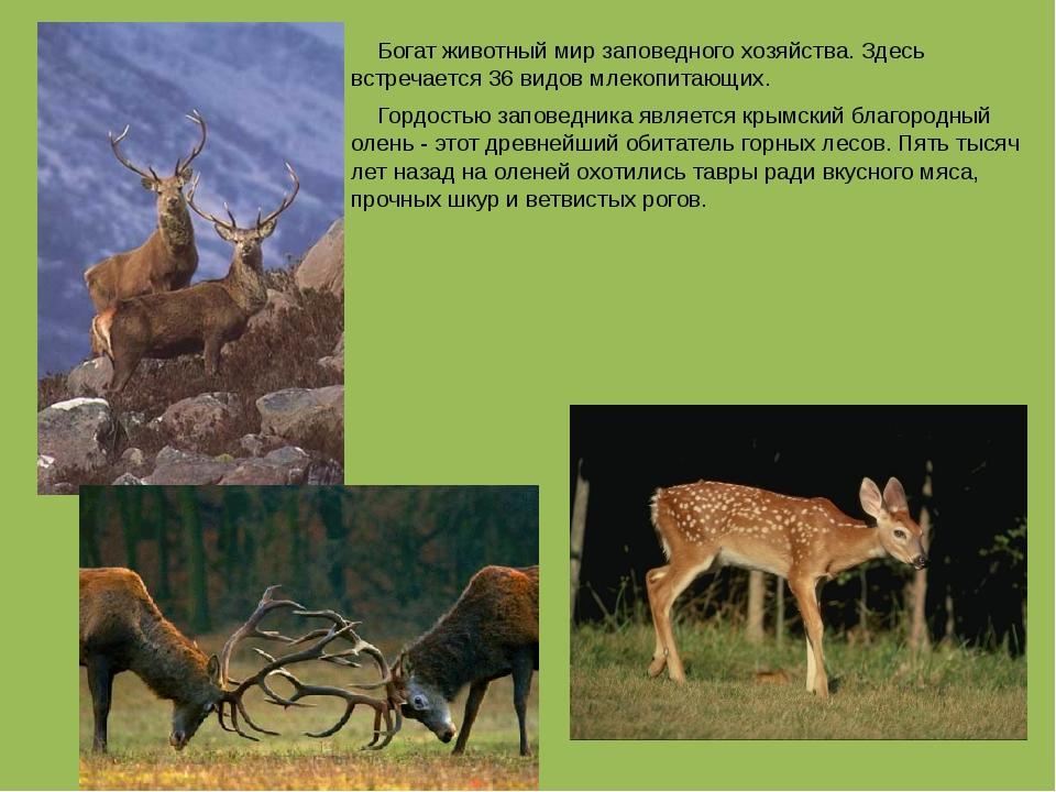 Богат животный мир заповедного хозяйства. Здесь встречается 36 видов млекопи...