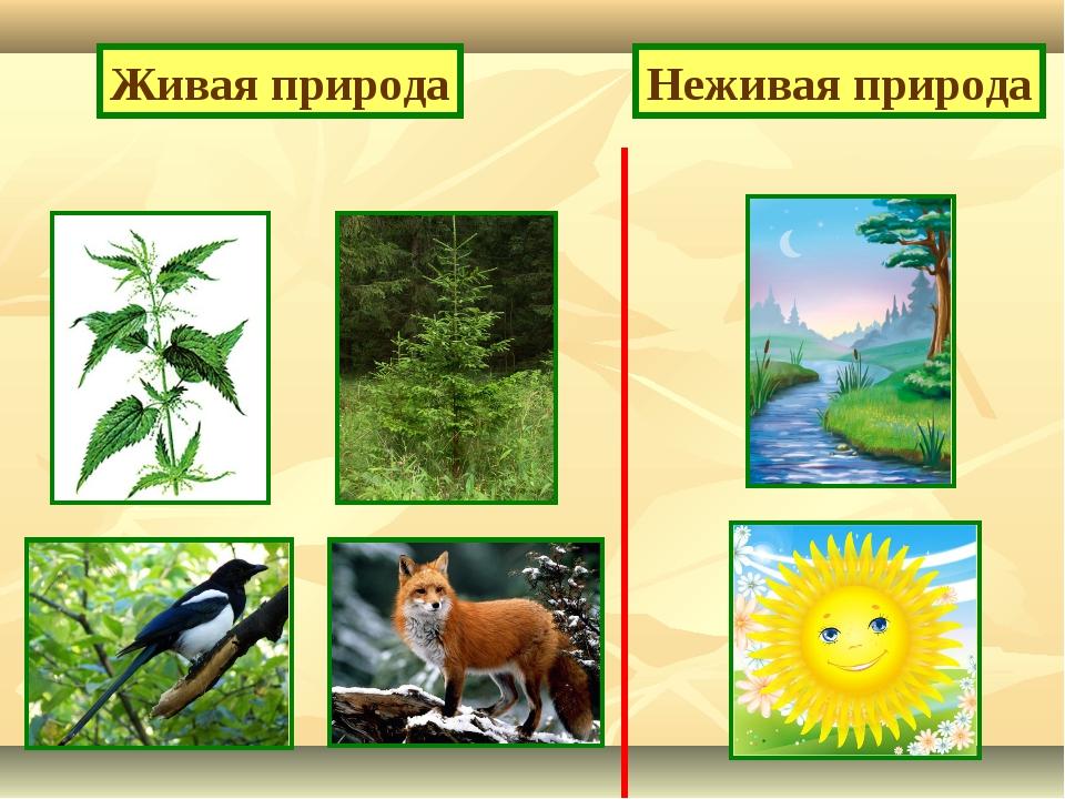 Живая природа Неживая природа