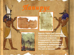 Папирус Вдоль Нила рос речной тростник с высоким и толстым стволом. Сердцевин