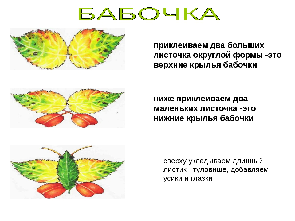 приклеиваем два больших листочка округлой формы -это верхние крылья бабочки н...