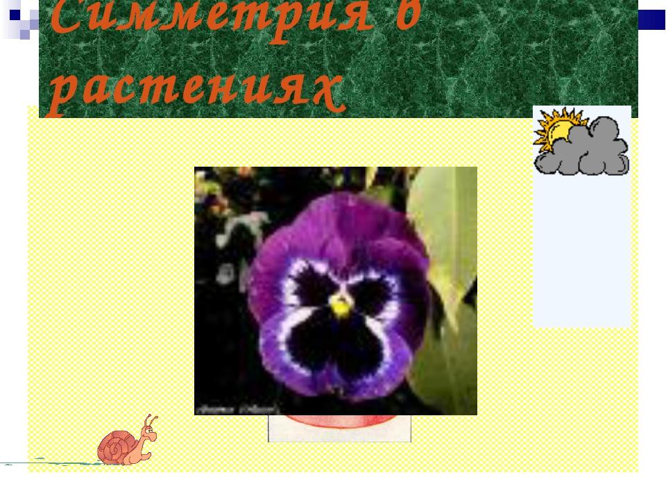Симметрия в растениях