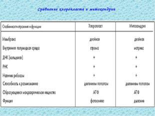Сравнение хлоропласта и митохондрии