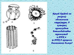 Какой буквой на рисунке обозначены структуры, в которых происходит взаимодейс