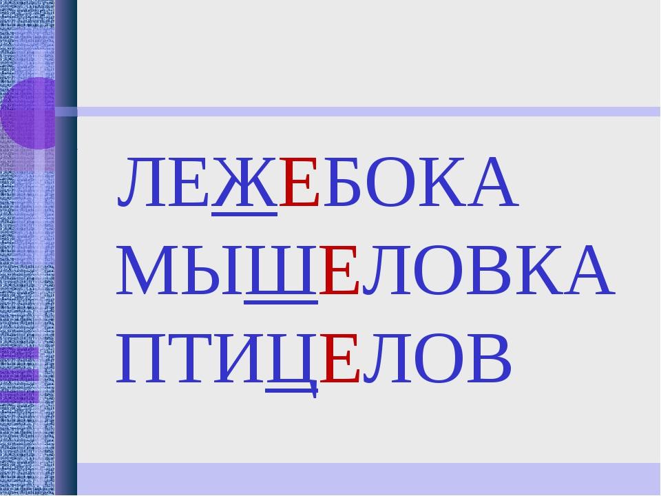 ЛЕЖЕБОКА МЫШЕЛОВКА ПТИЦЕЛОВ