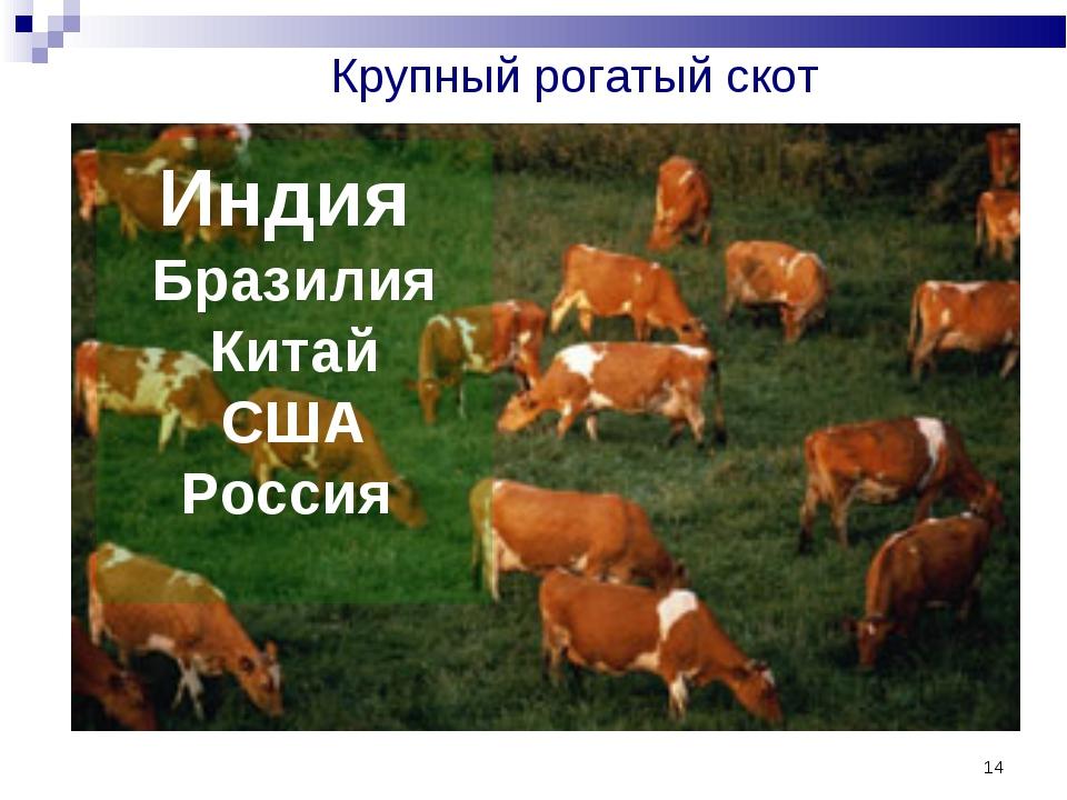* Крупный рогатый скот Индия Бразилия Китай США Россия