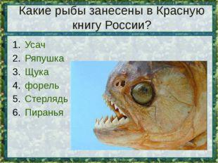 Какие рыбы занесены в Красную книгу России? Усач Ряпушка Щука форель Стерлядь