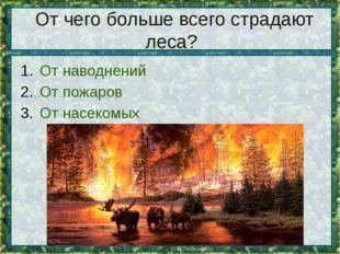 От чего больше всего страдают леса? От наводнений От пожаров От насекомых
