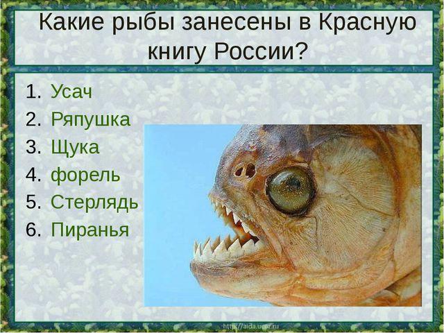 Какие рыбы занесены в Красную книгу России? Усач Ряпушка Щука форель Стерлядь...