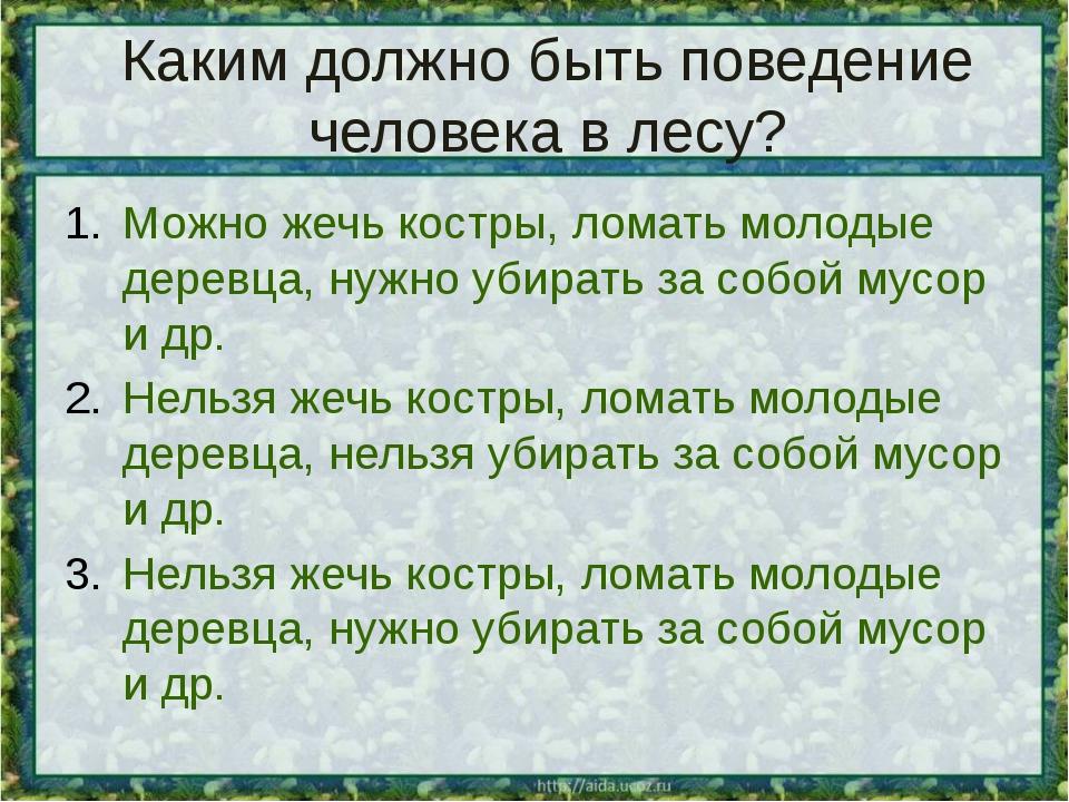 Каким должно быть поведение человека в лесу? Можно жечь костры, ломать молоды...