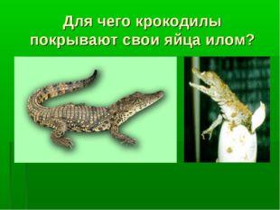 Для чего крокодилы покрывают свои яйца илом?