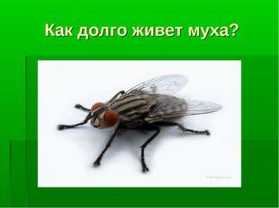 Как долго живет муха?