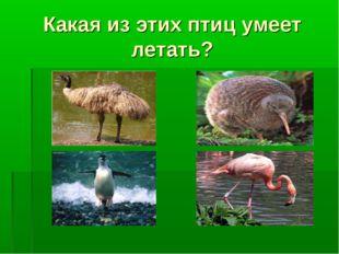 Какая из этих птиц умеет летать?