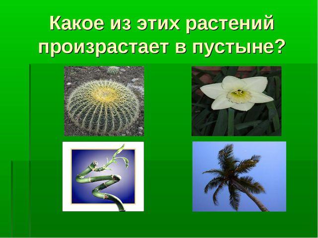 Какое из этих растений произрастает в пустыне?